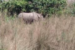 Como-dar-la-vuelta-al-mundo-rinoceronte-chitwan