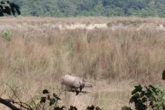Como-dar-la-vuelta-al-mundo-rino-chitwan