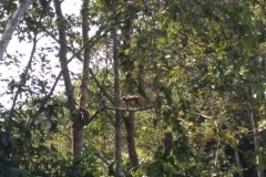 Como-dar-la-vuelta-al-mundo-monos-chitwan