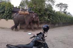 Como-dar-la-vuelta-al-mundo-elefante-chitwan