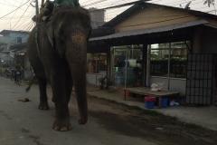 Como-dar-la-vuelta-al-mundo-chitwan-elefantes