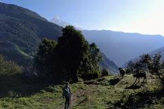 Como-dar-la-vuelta-al-mundo-trekking-annapurna