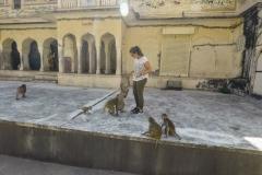 Como-dar-la-vuelta-al-mundo-monkey-temple