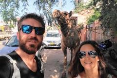 Como-dar-la-vuelta-al-mundo-camello-jaipur