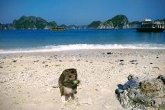 como-dar-la-vuelta-al-mundo-mono-monkey-island