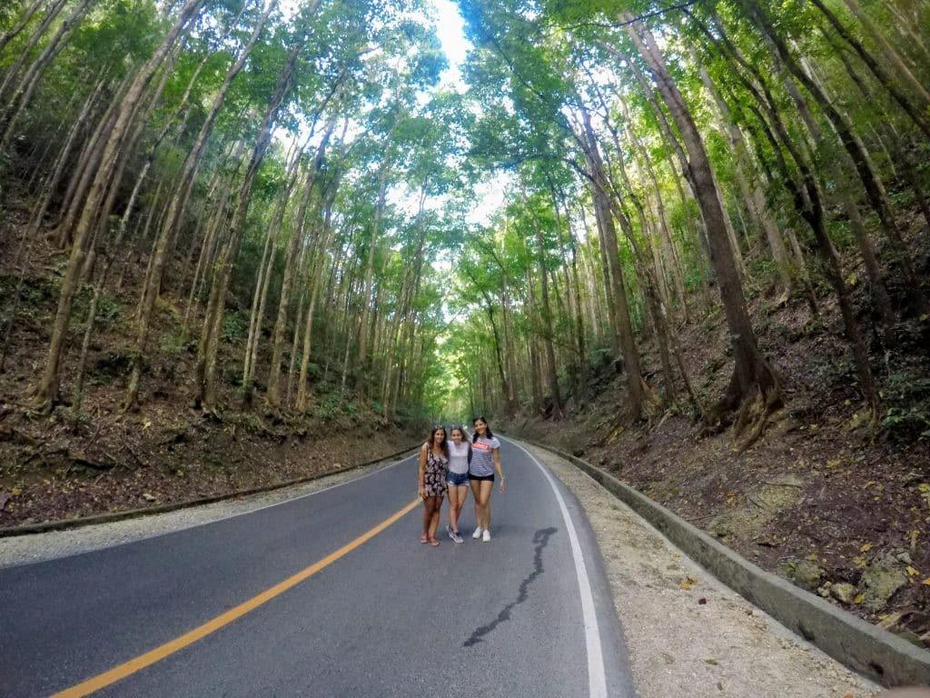 como-dar-la-vuelta-al-mundo-bohol-man-made-forest-min-1024x768