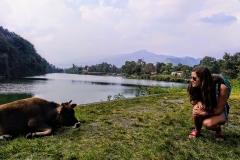 Como-dar-la-vuelta-al-mundo-vaca-en-pokhara